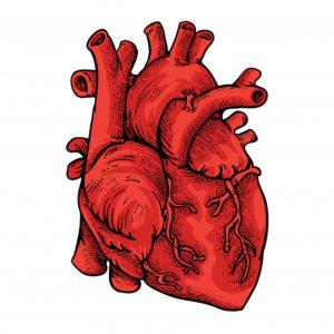 fitoterapia colesterol y triglicéridos